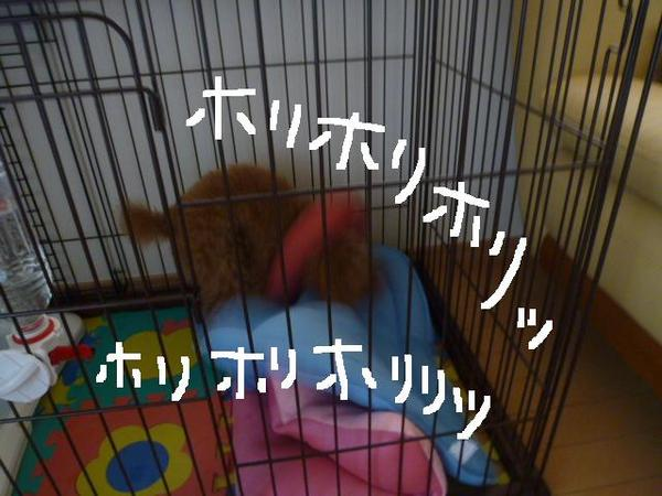 うさぎ ケージ 事件